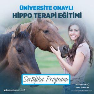 Hippo Atla Terapi Eğitimi Sertifikası